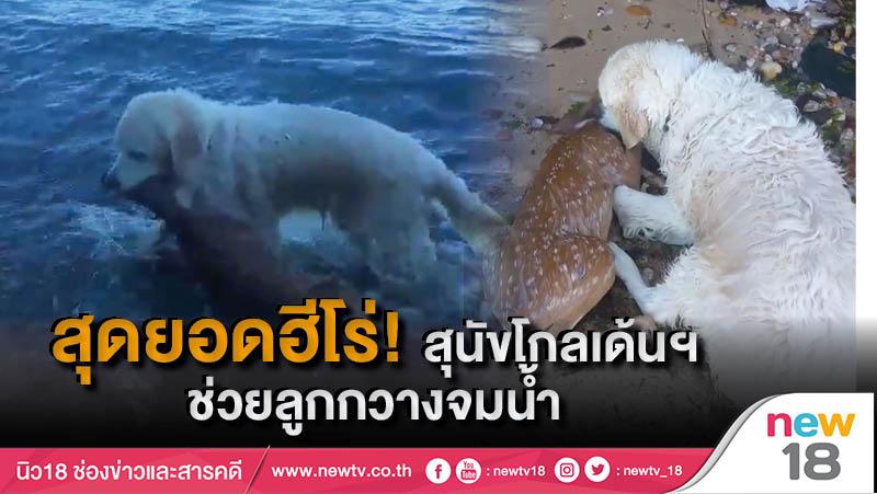 สุดยอดฮีโร่! สุนัขโกลเด้นฯ ช่วยลูกกวางจมน้ำ