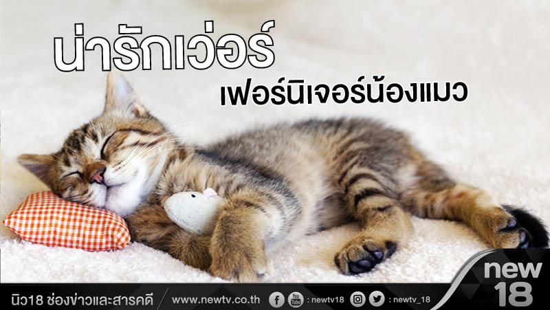 น่ารักเว่อร์! เฟอร์นิเจอร์น้องแมว