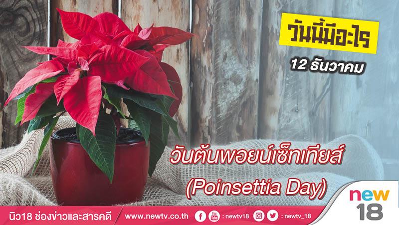 วันนี้มีอะไร: 12 ธันวาคม  วันต้นพอยน์เซ็ทเทียส์ (Poinsettia Day)