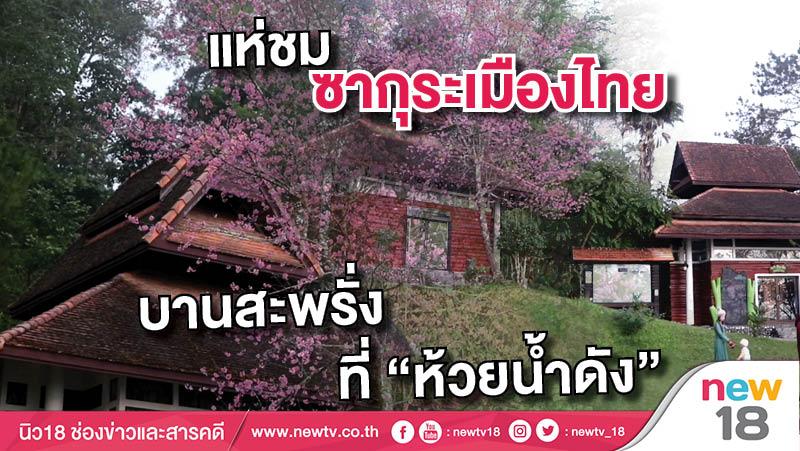 """แห่ชมซากุระเมืองไทย บานสะพรั่งที่ """"ห้วยน้ำดัง"""""""