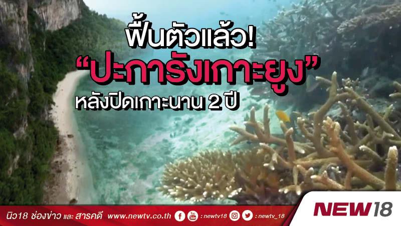 """ฟื้นตัวแล้ว! """"ปะการังเกาะยูง"""" หลังปิดเกาะนาน 2 ปี"""