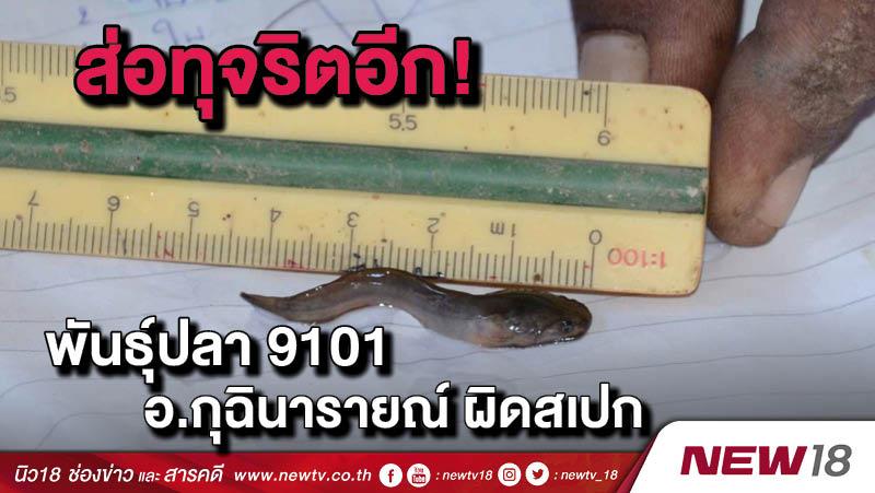 ส่อทุจริตอีก! พันธุ์ปลา 9101 อ.กุฉินารายณ์ผิดสเปก