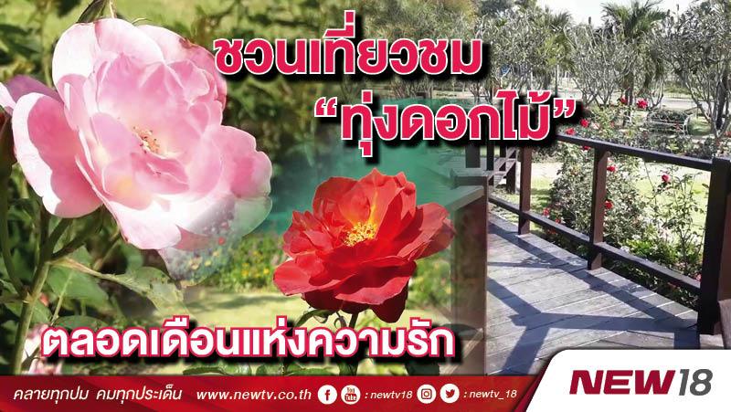 """ชวนเที่ยวชม """"ทุ่งดอกไม้"""" ตลอดเดือนแห่งความรัก"""