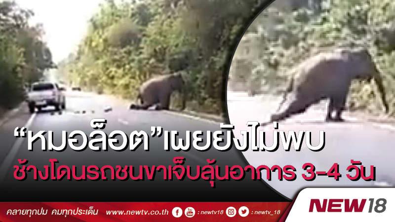 """""""หมอล็อต""""เผยยังไม่พบช้างโดนรถชนขาเจ็บลุ้นอาการ 3-4 วัน"""