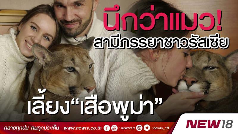 """นึกว่าแมว! สามีภรรยาชาวรัสเซียเลี้ยง""""เสือพูม่า"""""""